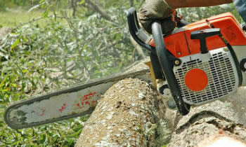 Tree Removal in Burlington VT Tree Removal Quotes in Burlington VT Tree Removal Estimates in Burlington VT Tree Removal Services in Burlington VT Tree Removal Professionals in Burlington VT Tree Services in Burlington VT